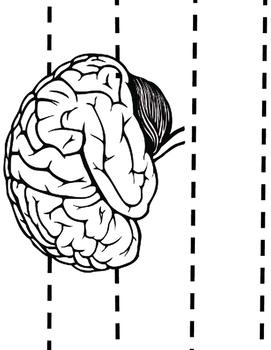 Brain Crown Craftivity for Health, Science, or Fun!