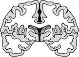 Brain Diagram Clipart