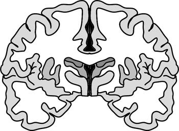 Brain Diagram Clipart