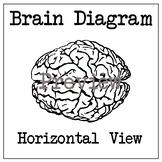 Brain Diagram - Horizontal (Top) View