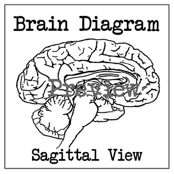 Brain Diagram - Sagittal Section (Inside)