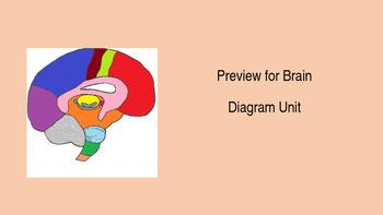 Brain Diagram Unit