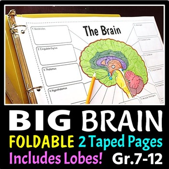 Brain Foldable - 3 Big Foldables for Interactive Notebooks or Binders