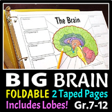 Brain Foldable - 3 Big Foldables for Interactive Notebooks