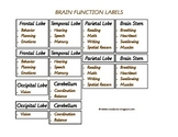 Brain Functions Labels