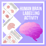 Brain Labelling Worksheet and Answers!