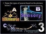 Brain, Nervous System Quiz Game