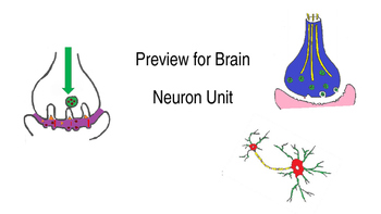 Brain Neuron Unit