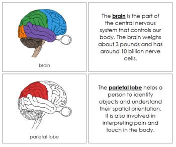 Brain Nomenclature Book (Red)