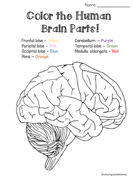 Bright image pertaining to brain printable