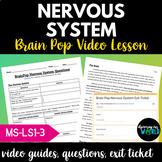 Brain Pop Nervous System Video Questions