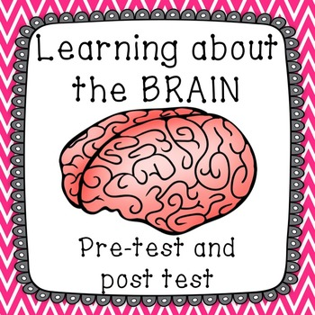 Brain Pre and Post Tests