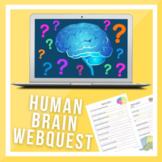 Brain Research WebQuest!!