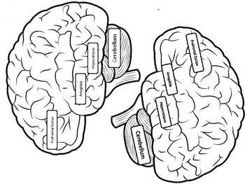 Brain State Headbands