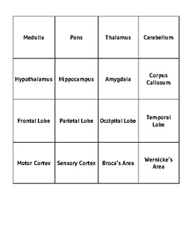 Brain Structures Memory Game