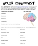 Brain Webquest