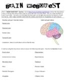 Brain Webquest