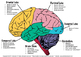 Brain-iac Learning Packet with Worksheets & Cards