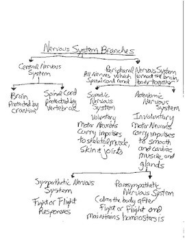 Branches of the Nervous System Concept Map