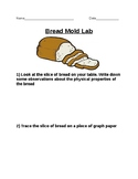Bread Mold Lab
