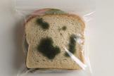 Bread mould investigation