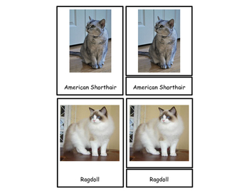 Breeds of Cats Three Part Cards