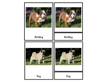 Breeds of Dogs & Cats 3 Part Cards