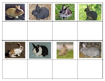 Breeds of Rabbits:  Mini Matching Cards
