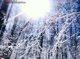 FREE Winter Spring Summer Fall!!!