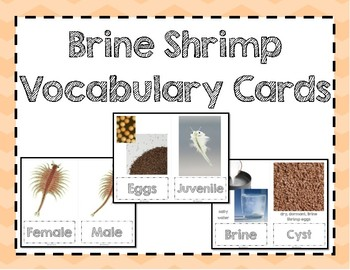 Brine Shrimp Vocabulary Cards