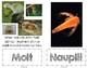 Brine Shrimp Vocabulary Cards