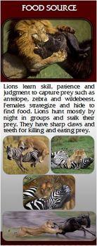 Brochure Template-Lions