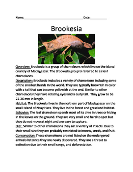 Brookesia - Lizard informational article lesson facts questions vocabulary