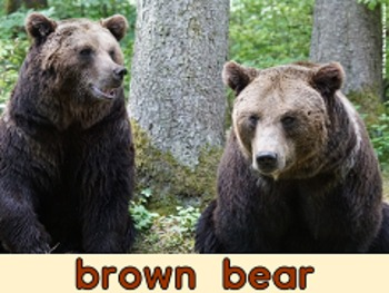 Brown Bear Brown Reading BUNDLE