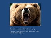 Brown Bears and Polar Bears fun facts expository reading a