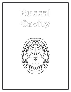 Buccal Cavity Notebook Pages