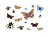 Bug and Butterfly Classroom Banner, Bulletin Decoration and Activity