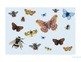Bug and Butterfly Classroom Banner, Bulletin Decoration an
