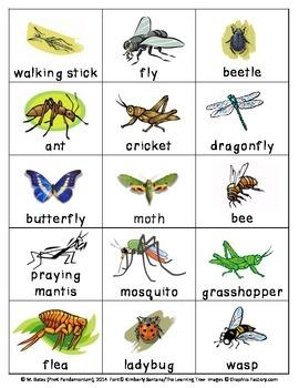Bug Flashcards Matching Cards Pictionary