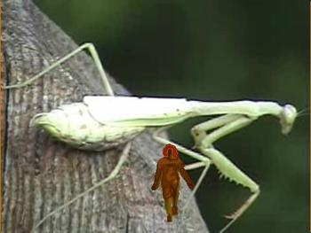 Bug Fred