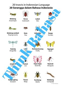 Bug Insect Indonesian Vocabulary Poster | Serangga | Bahasa Indonesia (20 words)