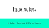Bug Lesson Plan