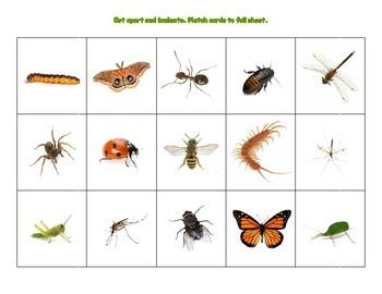 Bug Matching