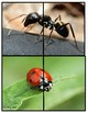 Bug Matching Puzzles