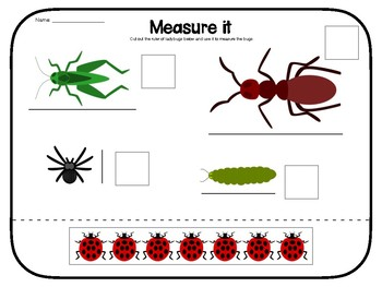 Bug Measuring