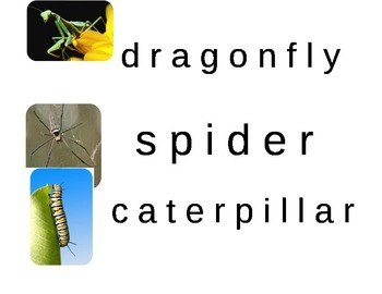 Bug Theme Letter Matching Activity