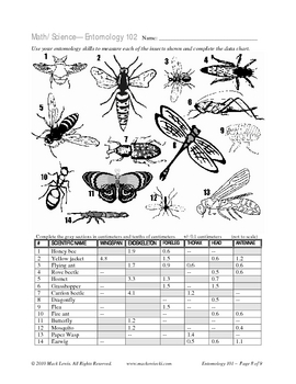 Bug and Insect Math: metric measure & insect classification