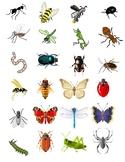 Bug book- mini