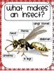 Buggy About Insects! {A Common Core Aligned Cross-Curricular Unit for K-1st}