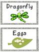 Bug Unit, Bug Packet, Bug Science, Spider Investigations,